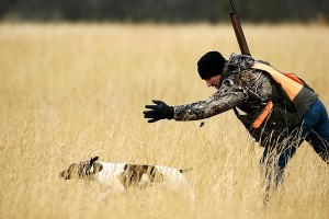 Doug Hardesty releases a German Shorthair Pointer to begin a Gun Dog Trial.